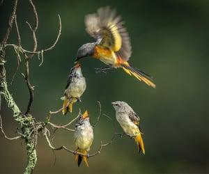 Feeding time by by Sofi Aida Sugiharto
