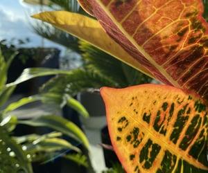 autumn, romance, and love image