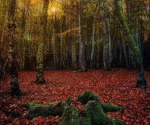 autumn, belleza, and naturaleza image
