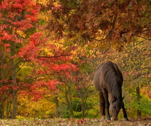 ".•.꧁..•°*°•..•°*°❤°*°•..•°*°•..꧂.•.            ""Beautiful wild horse""             by Christy LN 