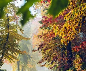 autumn, belleza, and colores image