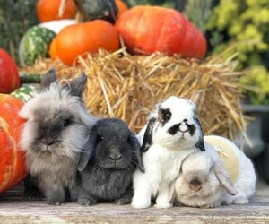 adorable, animals, and autumn image