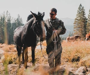 america, american, and horses image