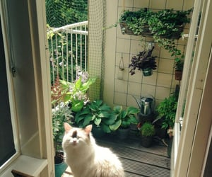 cat, plants, and home image