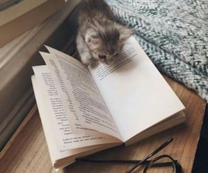 my two favorite things in the world ; cats & books ( Protect-And-Love-Animals ) / via aregrettablehullabaloo| Tumblr