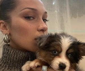 bella hadid, model, and dog image
