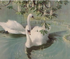 Swan, aesthetic, and art image