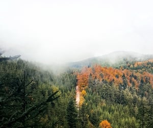 fall, foggy, and forest image