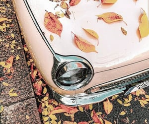 autumn, leaves, and car image