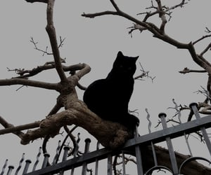 aesthetic, black cat, and cat image