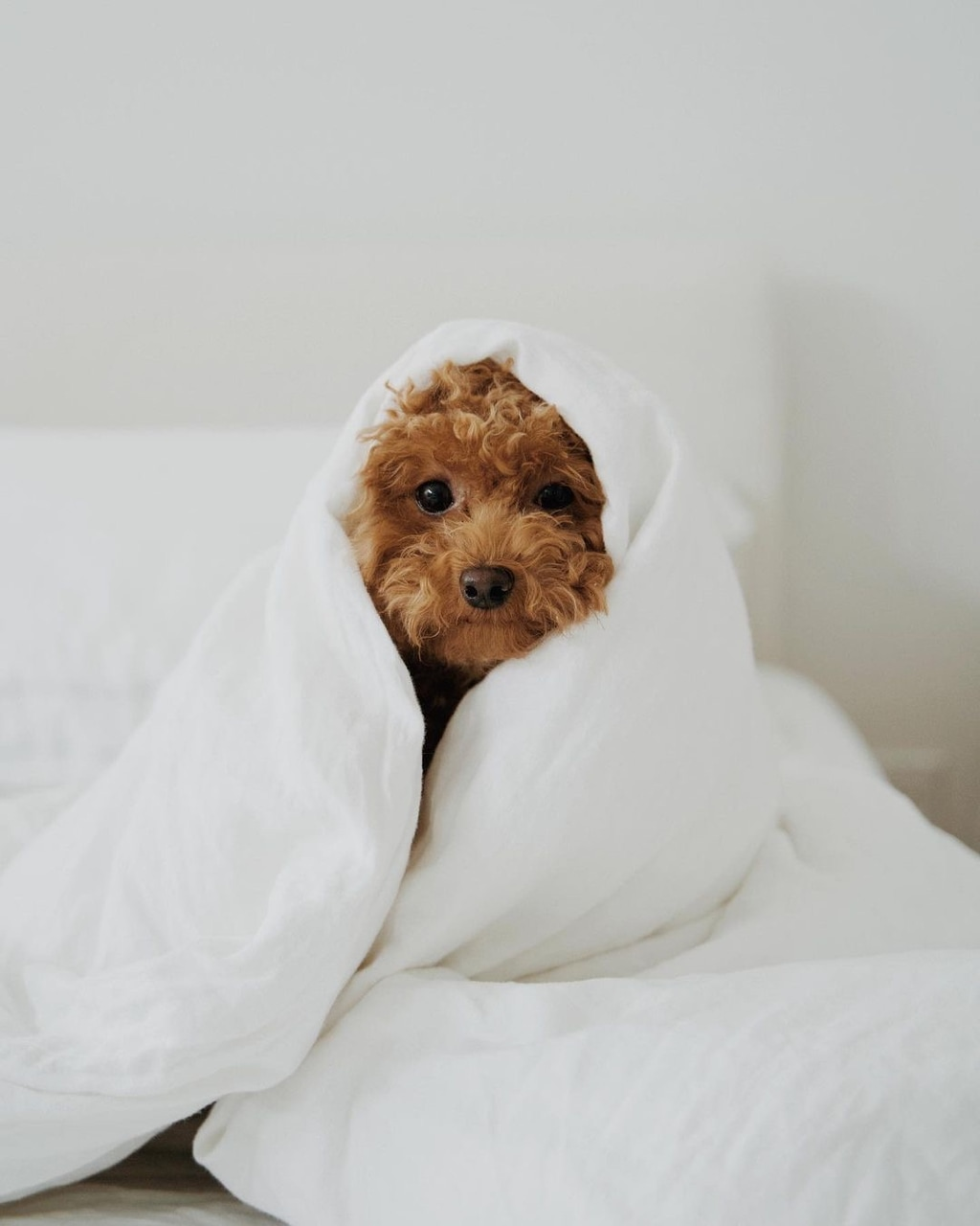 animal, fashion, and cute image