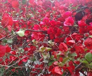 flor, flores, and naturaleza image