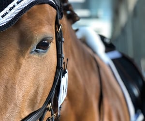 contest, horse, and dressage image