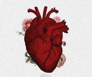 anatomy, animals, and heart image