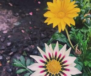 amazing, wildflowers, and salvajes image