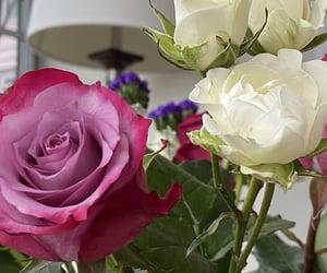 flowers, حُبْ, and pink image