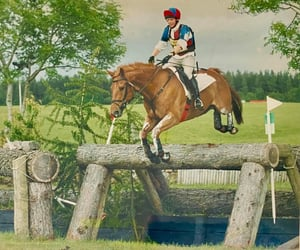 chestnut, cross, and jump image