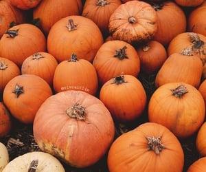 cozy, kürbis, and autumn image