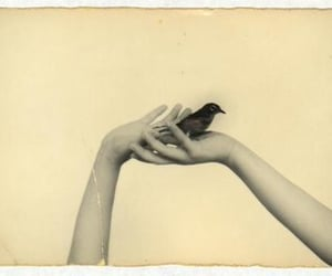 bird, black, and picture image