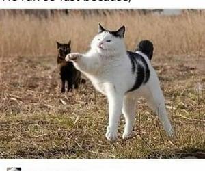 animals, kitten, and oop image
