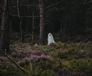autumn, forest, and ghost image
