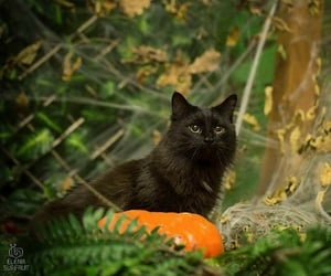 adorable, beautiful, and black cat image