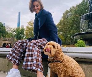 dog, instagram, and fashion image