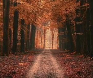 Autumn...this way...