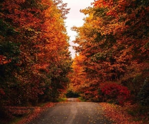 autumn, beauty, and travel image