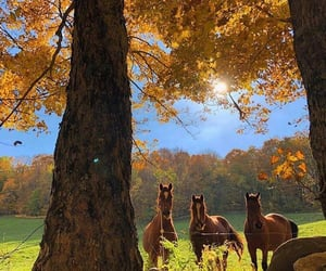 horse, autumn, and nature image