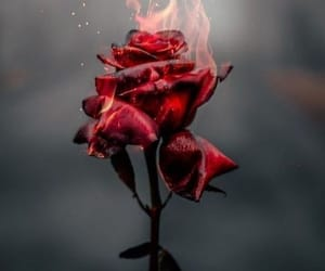 flowers, background, and fire image