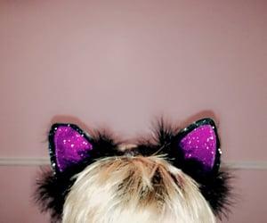 black, ears, and Halloween image