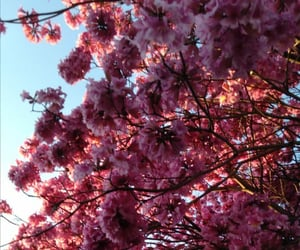 lindo, rosa, and naturaleza image