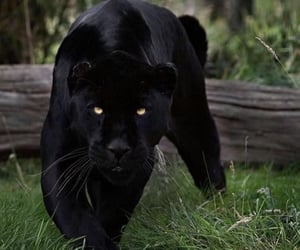 animal, wild, and nature image