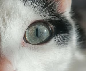 beauty, cat, and eye image