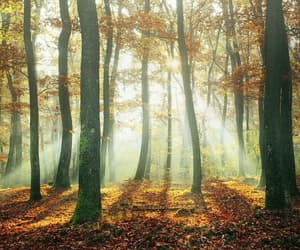 autumn, forest, and outdoors image
