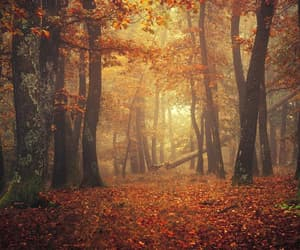 autumn, forest, and mist image