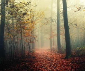 atmosphere, foggy, and forest photo image