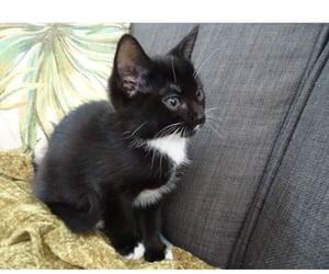 black cat, black kitten, and cat image