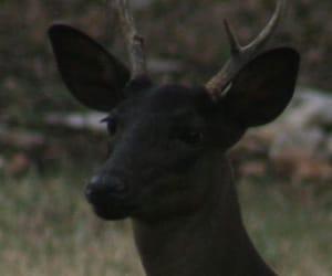 deer and black image