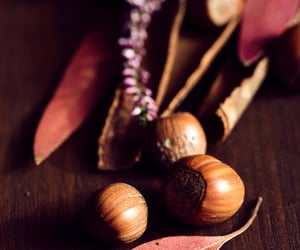 acorns, fall, and thanksgiving image