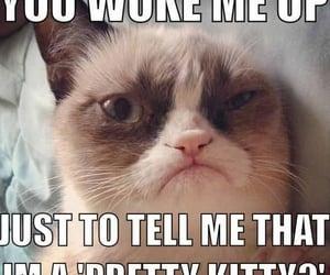 funny, lol, and grumpycat image