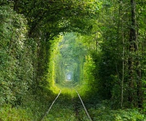 nature photography, photography, and nature tunnel image