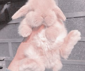 fluff, aesthetic, and bunny image