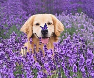 animal, nature, and dog image