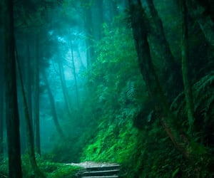 enchanted forest, forest, and green forest image