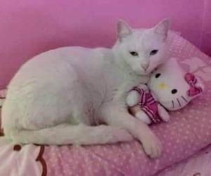 cat, hello kitty, and kitty image