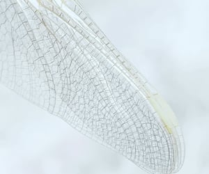 angelic, close up, and delicate image