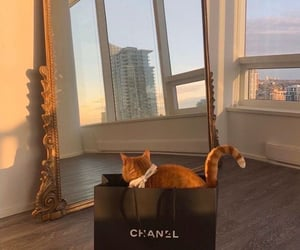 chanel, cat, and home image
