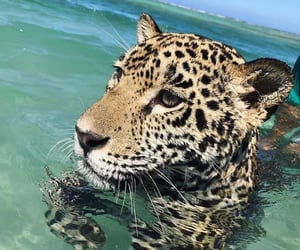 animal, beau, and tache image